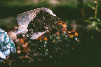 Посадка цветов осенью: кто-то вскапывает землю