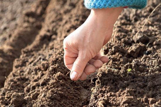 Рука сеет семена: осенний посев овощей под зиму