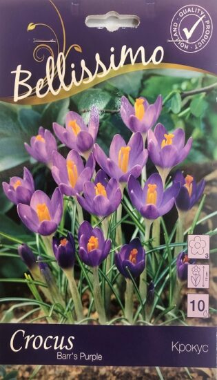 Упаковка - Крокус Barr's Purple Bellissimo 10 лук.
