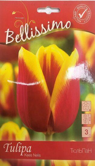 Упаковка - Тюльпан Kees Nelis Bellissimo 3 лук.