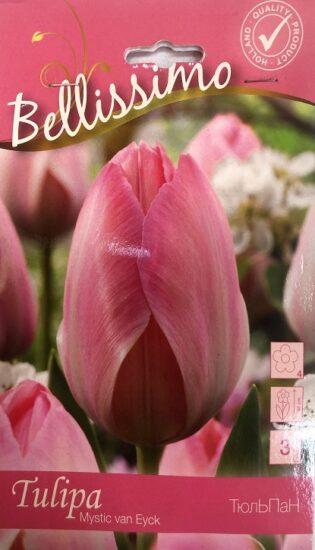 Упаковка - Тюльпан Mystic van Eyck Bellissimo 3 лук.