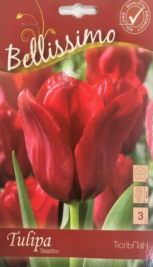 Упаковка - Тюльпан Seadov Bellissimo 3 лук.