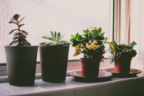 Комнатные растения на подоконике - Уход за комнатными цветами зимой