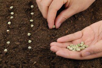 Посев семян: Весенняя посадка овощей