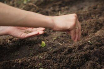 Посев семян: что можно сажать в июне