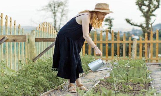 Полив садовых цветов и растений