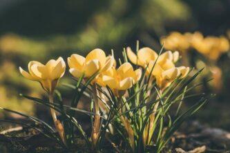 Садовые цветы на клумбе